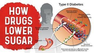Diabetes Medication Effects: Metformin, Sulfonylurea & Insulin