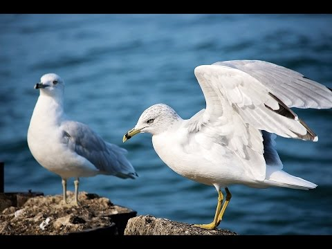 ♡ Full Audio-Book ♡ Jonathan Livingston Seagull By Richard Bach Timeless Spiritual Classic