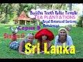 Канди / Ботанический сад / Чайные плантации / Kandy / Royal Botanic Gardens