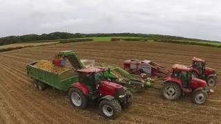 Harvesting potatoes and drilling wheat