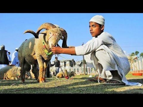 Eid al-Adha 2017 around the World Documentary celebrations Mubarak عيد الأضحى