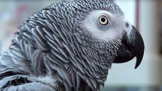 Einstein vs Griffin | The World's Smartest Parrots | Extraordinary Animals | Earth