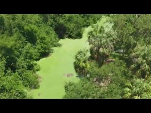Florida declares state of emergency over toxic algae bloom