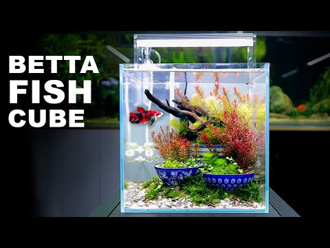 aquascape-tutorial:-ikebana-betta-fish-cube-aquarium-(how-to:-full-step-by-step-planted-tank-guide)
