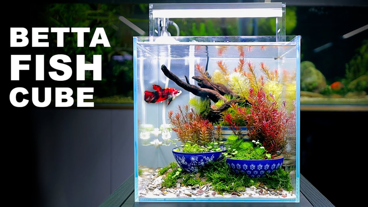 Aquascape Tutorial: IKEBANA BETTA FISH Cube Aquarium (How To: Full Step By Step Planted Tank Guide)