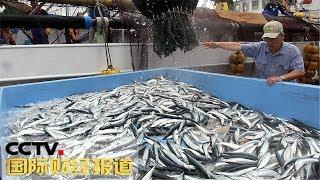 [国际财经报道] 日本:气候变暖致捕获量创新低 秋刀鱼涨价 | CCTV财经