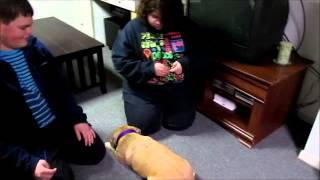 Classical Conditioning: Teaching A Dog To Sit And Lay Down