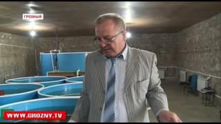 УЗВ оборудование для вырашивания рыб в Грозном(УЗВ для выращивания любого вида рыб. Проектируем изготавливаем устанавливаем прилагаем методичку по уходу..., 2016-06-02T04:31:56.000Z)