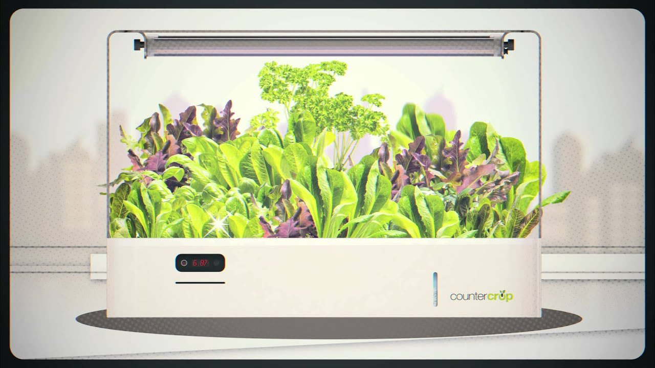 garden design with countercrop a smart indoor garden for your countertop youtube with free garden design