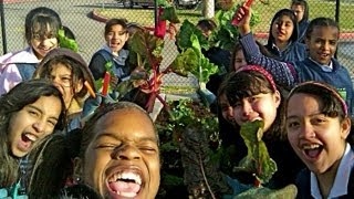 How To Start A School Garden - Help Kids Grow Healthy Food!