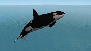 Big Orca Pod - ROBLOX Wild Ocean