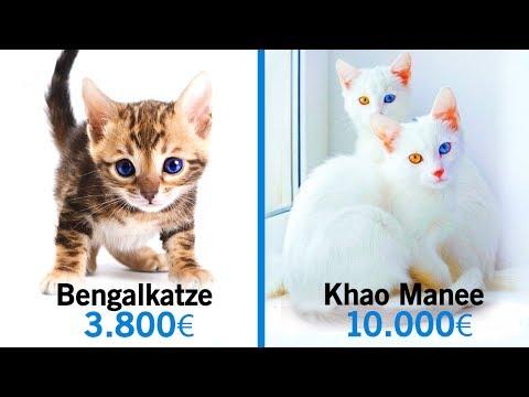 10 Unglaubliche Katzen, die ein kleines Vermögen kosten!
