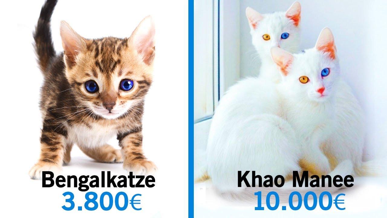 Kosten Katze