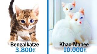 10 Unglaubliche Katzen, die ein Vermögen kosten!