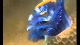 Морские черви.avi