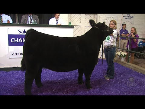 4H and FFA Sale of Champions
