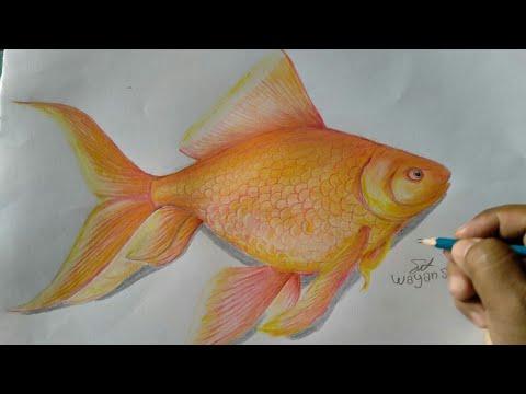 Ikan Mas Hias