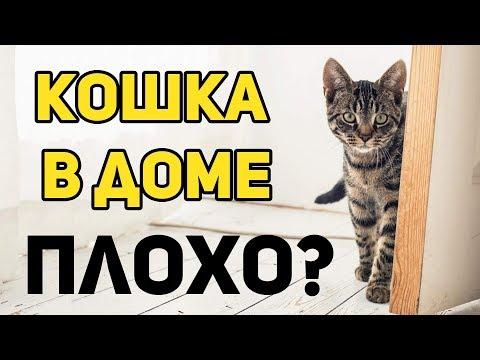 Вопрос: Как в православии относятся к кошкам?