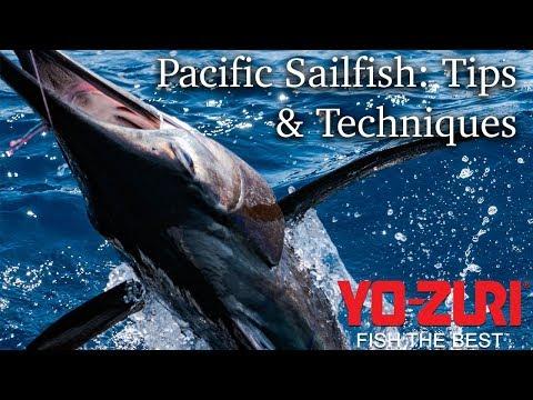 Pacific Sailfish: Tips & Techniques