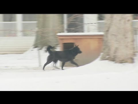 New law in Boardman says pets can't be left outside in cold