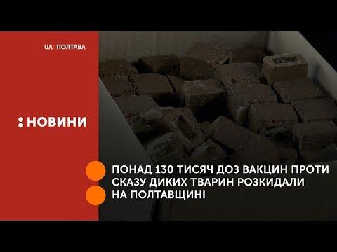UA: Полтава: Понад 130 тисяч доз вакцин проти сказу диких тварин розкидали на Полтавщині