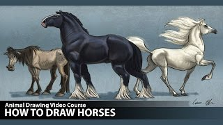 Drawing Lessons - How to Draw Horses (Preview)