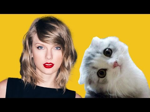 Taylor Swift 's Cats - Olivia and Meredith - Cat Videos -New Video