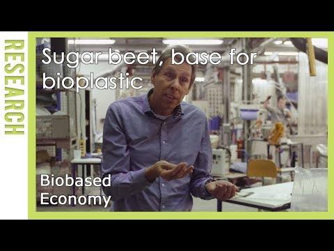 Biobased Economy: Suikerbieten, basis voor bioplastic | WUR