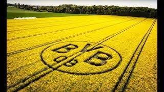 The BVB rapeseed field   🌱   Crazy idea of two Dortmund fans
