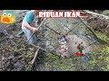 Edaaan...Satu Kampung Ikan Tercyduk Bapak ini Ahli Tajur dan Jebakan Ikan#127