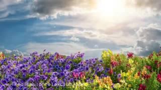 Repeat youtube video Zen Innere Ruhe: 8 STUNDEN Sanfte Musik zur Heilung, Meditation und Konzentration