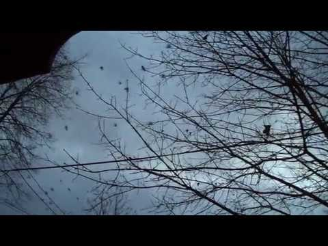 A murder of crows over Old Ottawa East on 3 December 2016