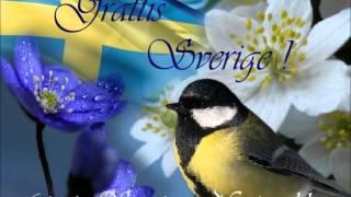 6 Juni  Sveriges Nationaldag Grattis Sverige Silvia Regueira .wmv