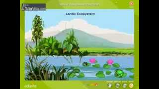 Natural ecosystem of the world