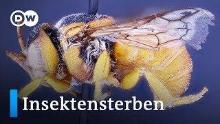 Marokko: Forschung gegen das Insektensterben   Global Ideas