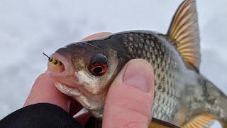 Ловля плотвы на догонялку и безмотылку Обманка сделала рыбалку в глухозимье 2021