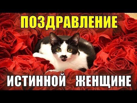 Поздравление с 8 марта! В международный женский день лучшее поздравление с кошками и цветами! - Лучшие приколы. Самое прикольное смешное видео!