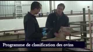 CEPOQ - Service de classification des ovins