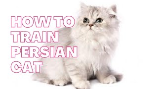 How to train Persian cat || 10 method  to train Persian cat || 5 Ways to Care for Persian Cats