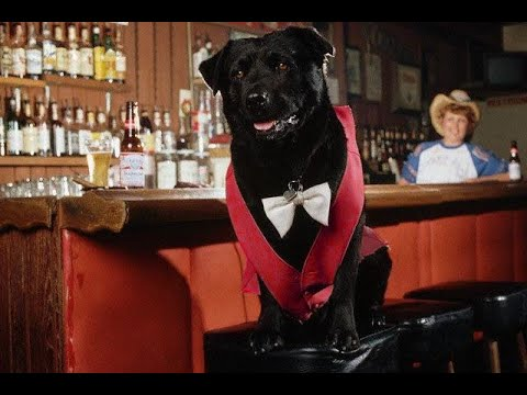 Bosco the Dog - The Mayor Of Sunol, California - At Bosco's Bones & Brew