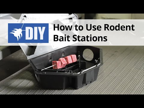 How To Use Rodent Bait Stations