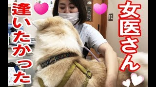 grandchild and #秋田犬#AkitaInu #JAPANESEAKITA#女医#veterinary hosp...