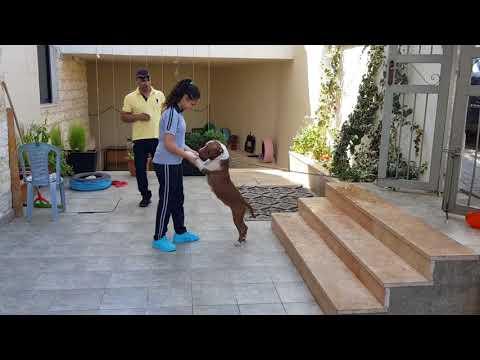 عندما تقرر عائله الاستغناء عن كلبهم المفضل مع جمال العمواسي