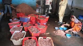 Jhaingay /Prawn/ Shrimp Pakistan mein Dr Ashraf Sahibzada
