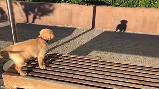 Dog reacting to its own shadow - 1056807