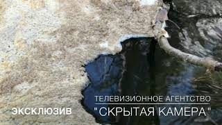 Отравленная река Ольховка