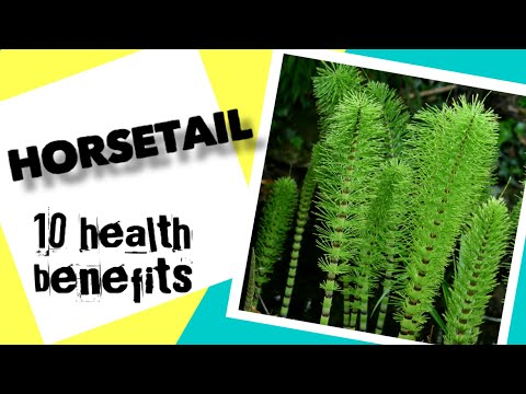 10-health-benefits-of-horsetail- -herbal-medicine