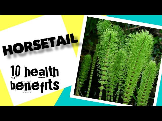 10 Health Benefits of Horsetail | Herbal Medicine