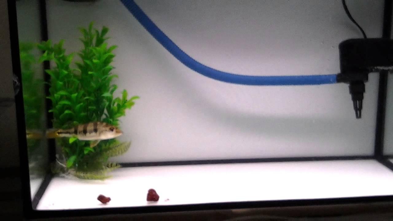 simple landscape aquarium youtube
