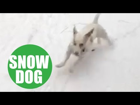 Dog rescued from Puerto Rico goes nuts when he sees snow
